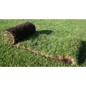Рулонный газон (3)
